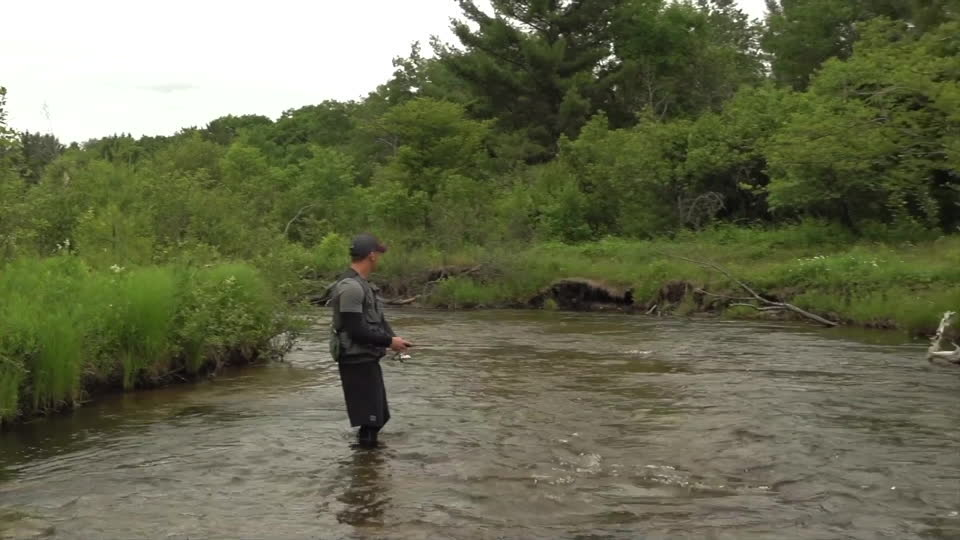 Spinner Brook Trout
