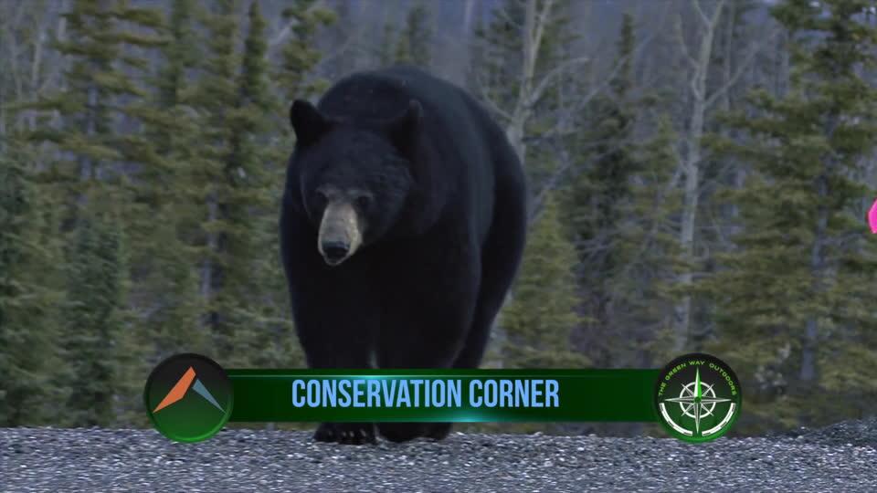 Late Season Bear