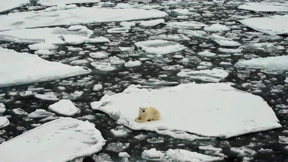 Angry Planet S01 E10 - Polar Bears