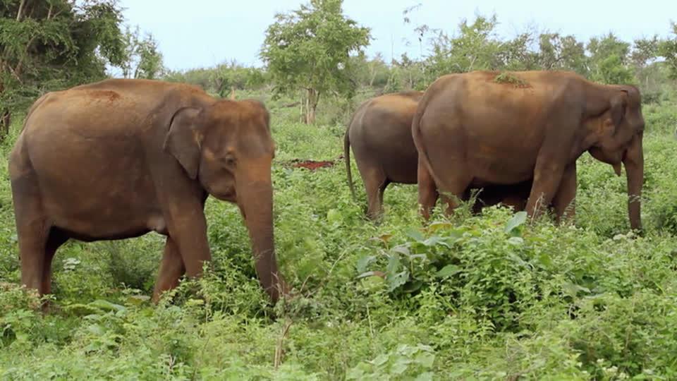 Glamping Adventures S01 E08 - Leopard Trails Camp, Yala National Park (Sri Lanka)