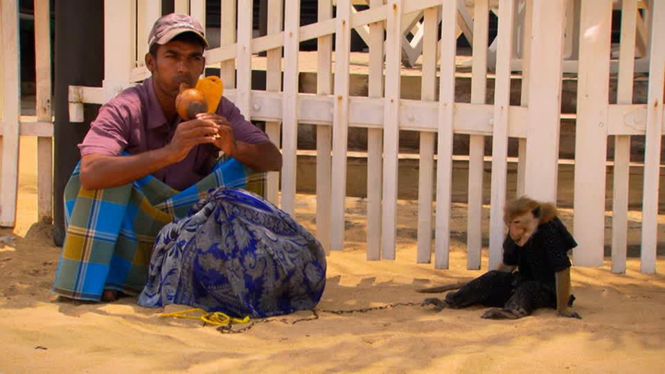 My Sri Lanka S01 E01 - Colombo