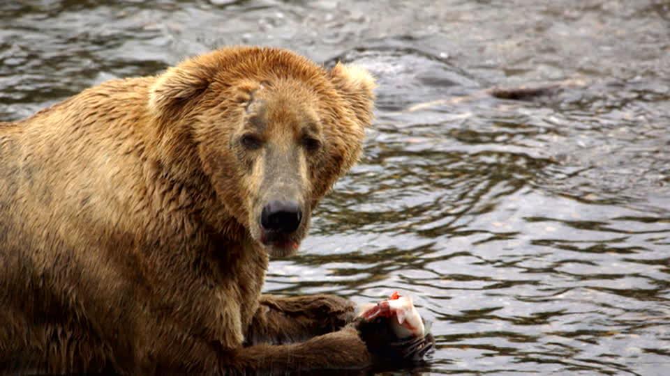 Rock the Park S01 E01 - Katmai: Where the Bears Are