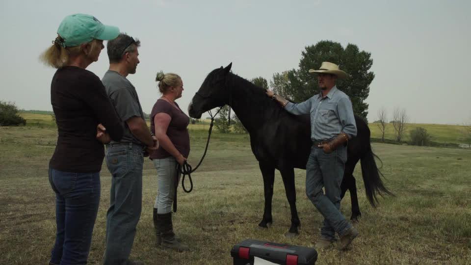 Equine Therapy - Cheyenne Conacher