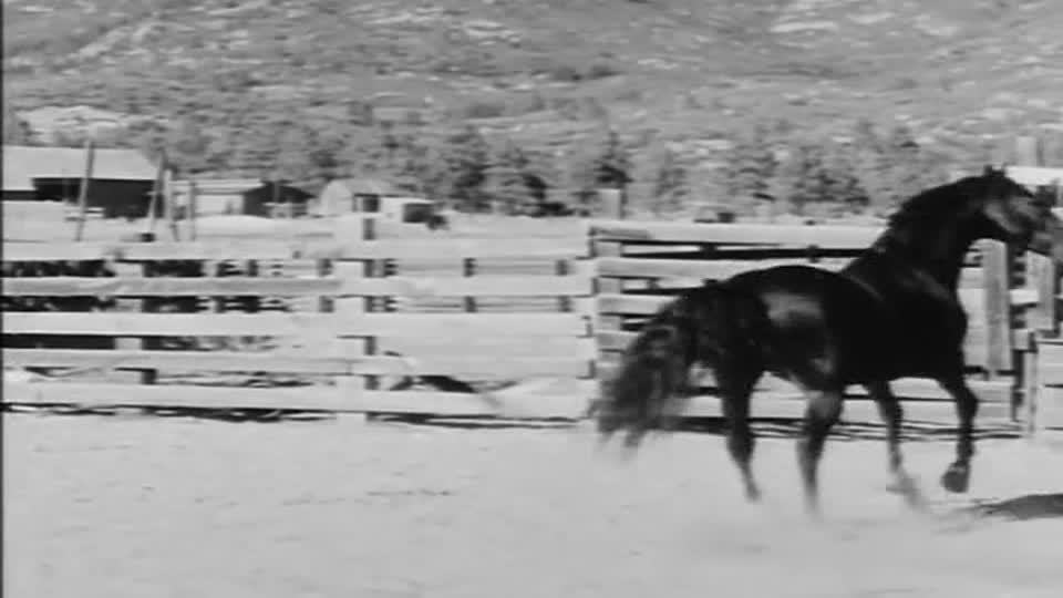 Killer Stallion