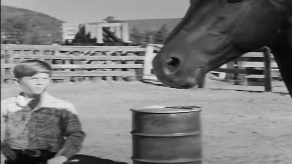 The Horse Coper